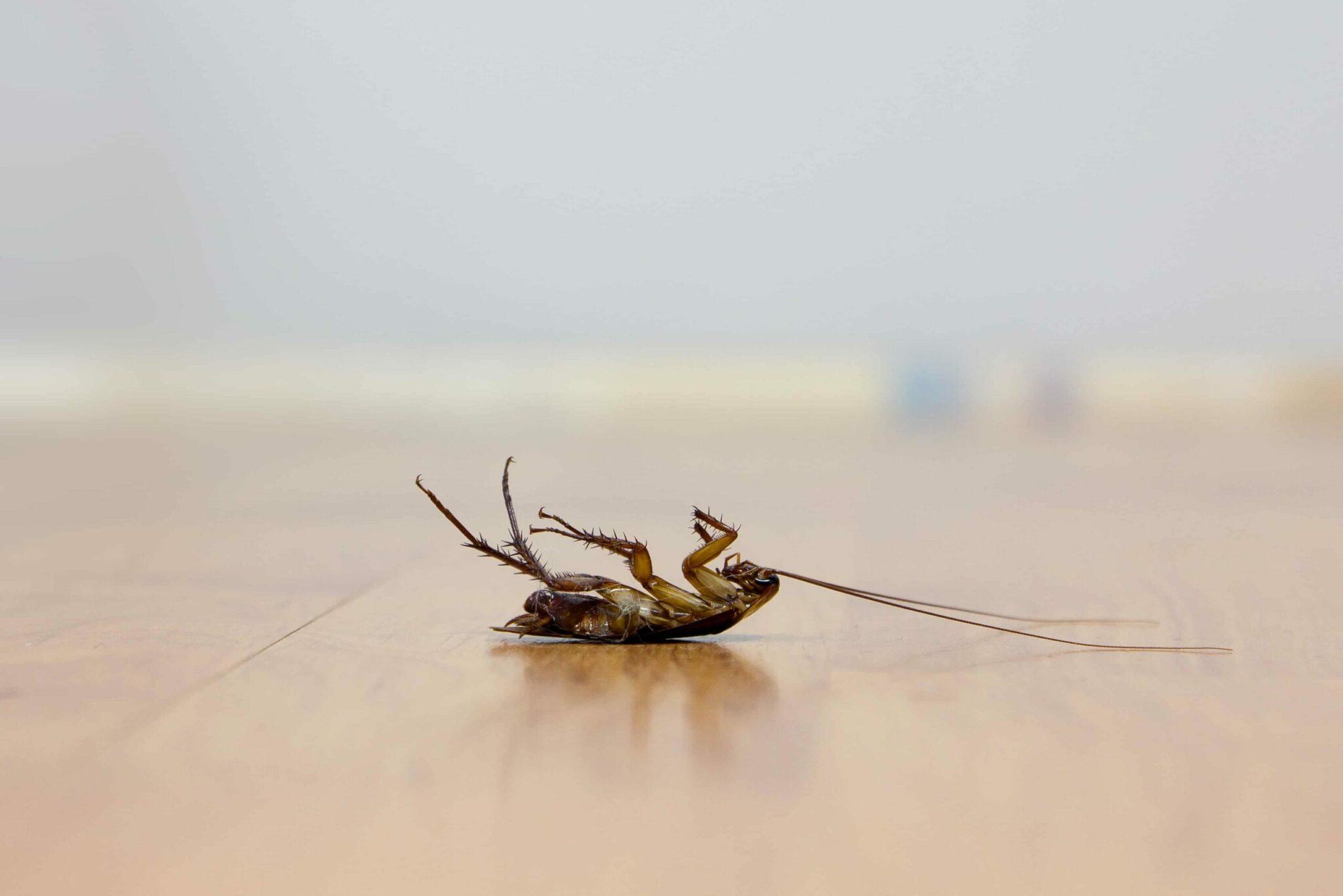 Prodotti Contro I Gechi argomenti correlati: gechi mangiano scarafaggi