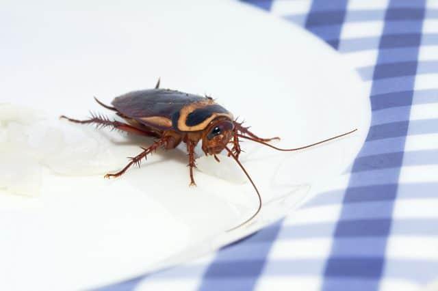 Come entrano gli scarafaggi - Da dove vengono gli scarafaggi in casa ...
